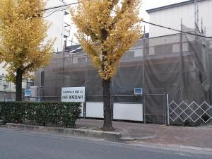 医院の前のイチョウの葉っぱが 綺麗な黄色に色づきました。